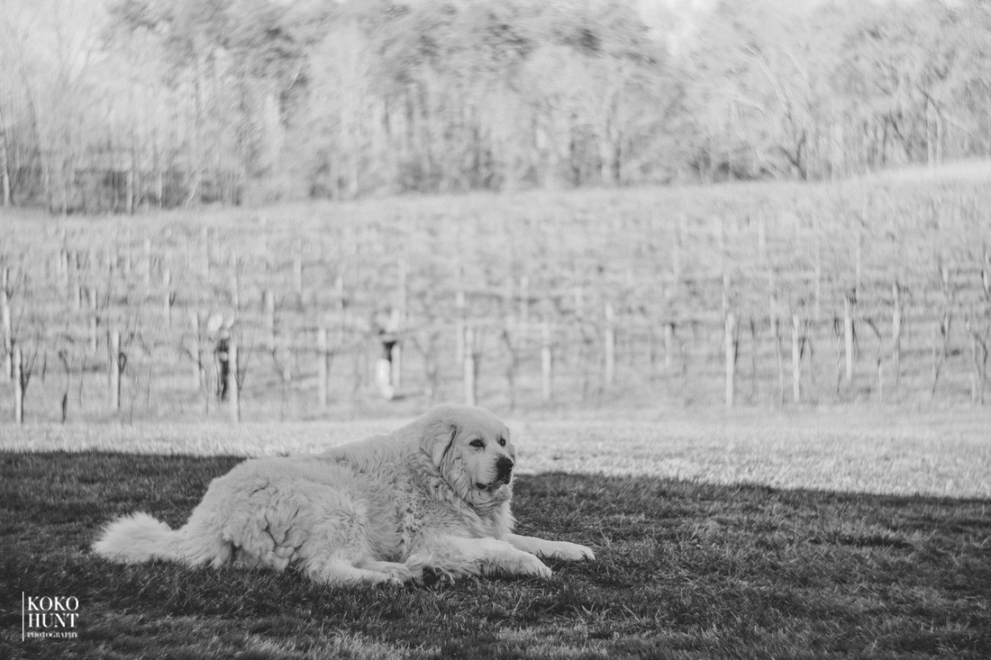 The guardian of the vineyard